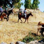 טיול סוסים בגולן